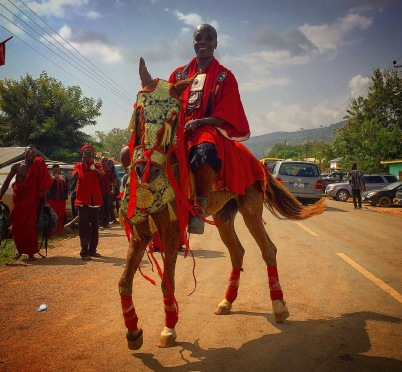 Horse at Funeral Service